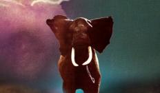 Le nouvel album de Zombi, Spirit Animal dispo en streaming