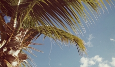 Palms : quand Deftones rencontre Isis