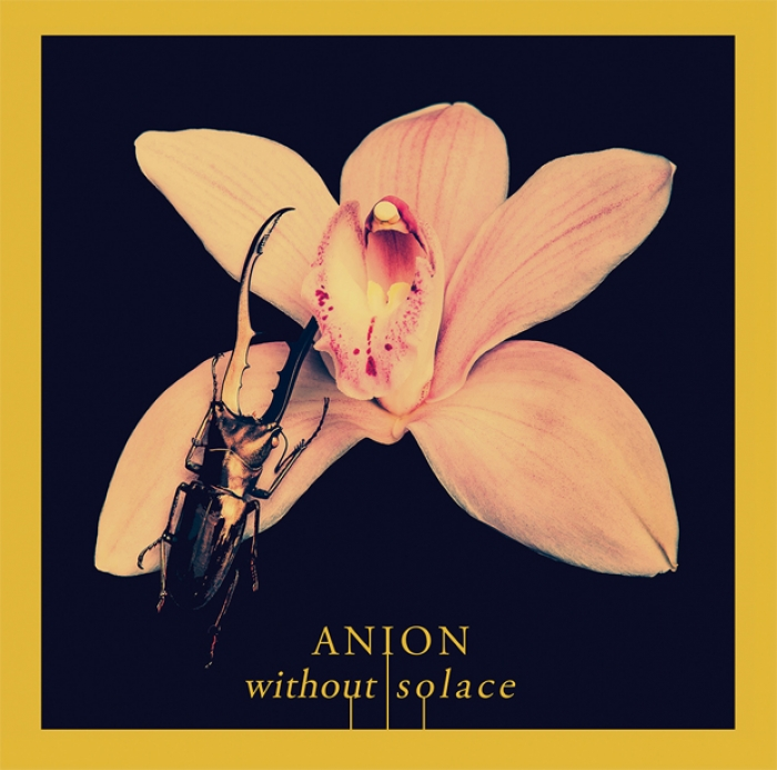 Anion : Without Solace, douceur canadienne originaire de Vancouver en streaming intégral